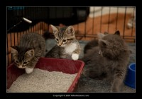 09-07-30_kittens-batch-2-9805.jpg