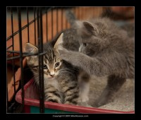 09-07-30_kittens-batch-2-9806.jpg