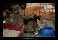 09-07-30_kittens-batch-2-9807.jpg