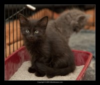 09-07-30_kittens-batch-2-9847.jpg