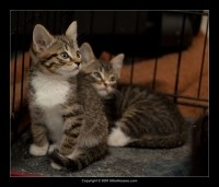 09-07-30_kittens-batch-2-9872.jpg