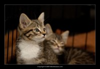 09-07-30_kittens-batch-2-9873.jpg