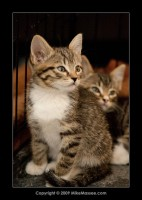 09-07-30_kittens-batch-2-9875.jpg