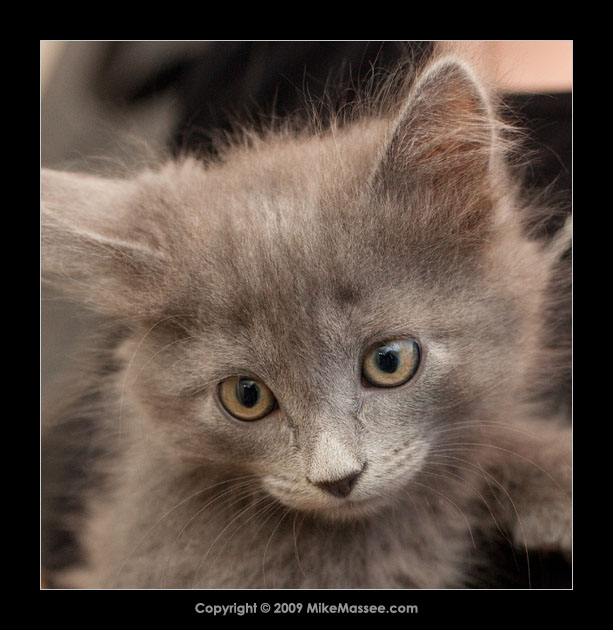 07-05-06_kittens-the-new-batch-9933-2.jpg